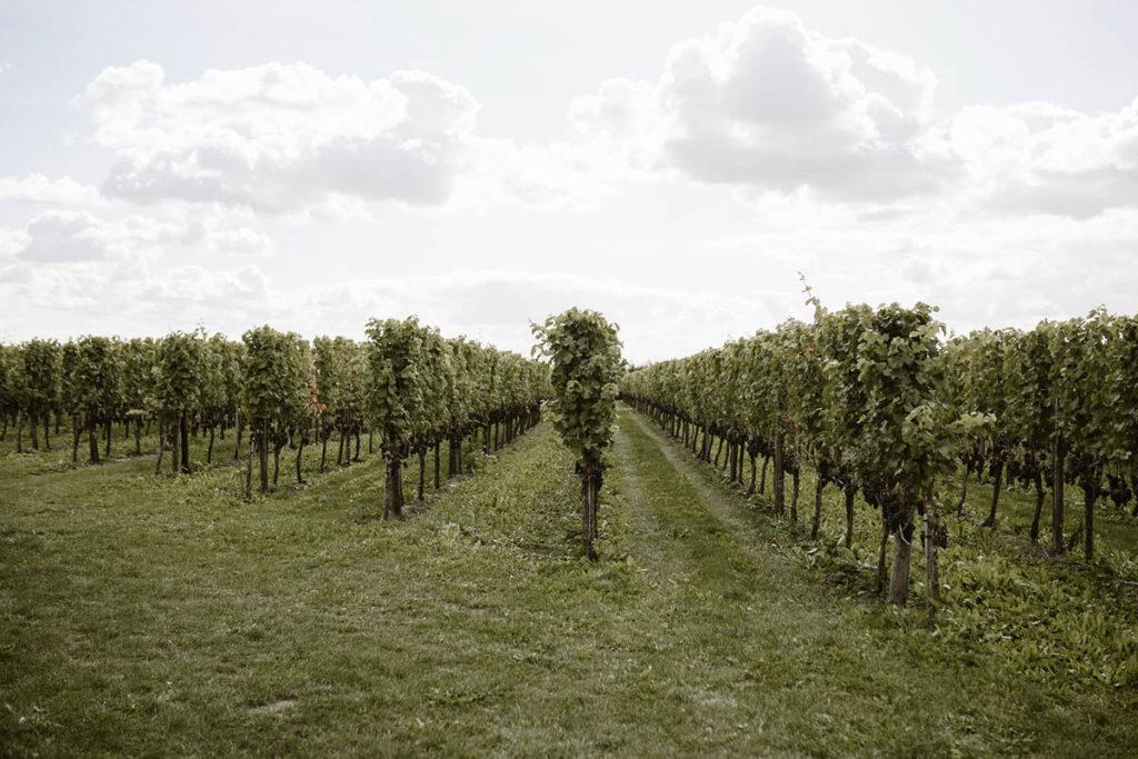 styled shoot wijngaard